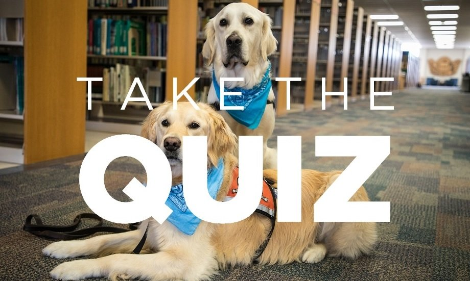 Quiz: Which CUW Comfort Dog Are You?