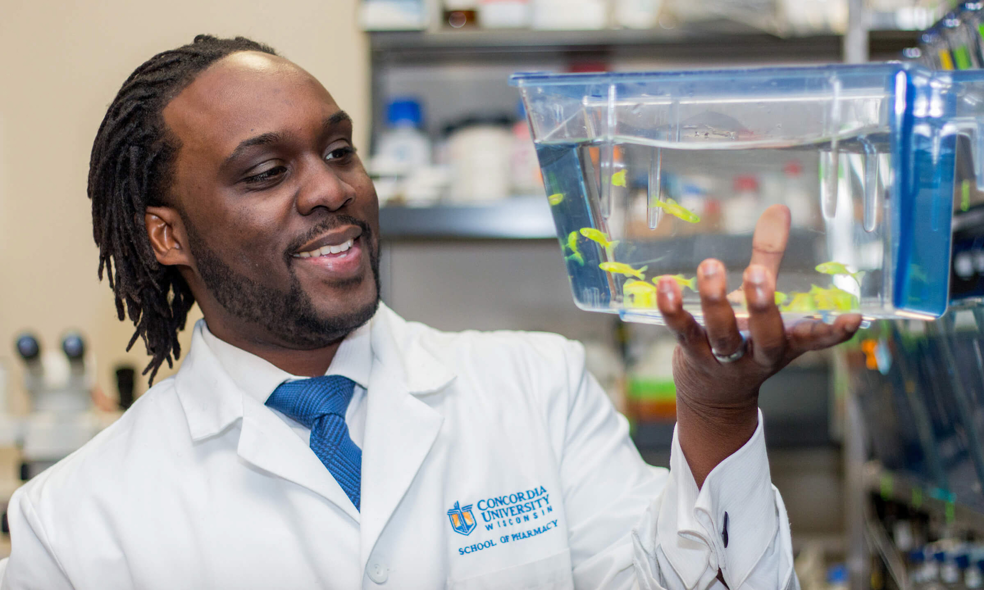 Kwadwo Owusu-Ofori, the first to be accepted into CUW's first pharmacy fellowship program, examines some zebrafish in Concordia's School of Pharmacy.